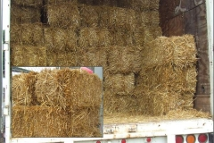 Straw is baled dried stalks of grain. RSSY offers baled straw for erosion control, ground cover, water quality protection, or any other need you may have. Most commonly used for grass seeding.